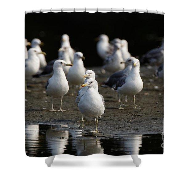 Gulls At The Beach Shower Curtain
