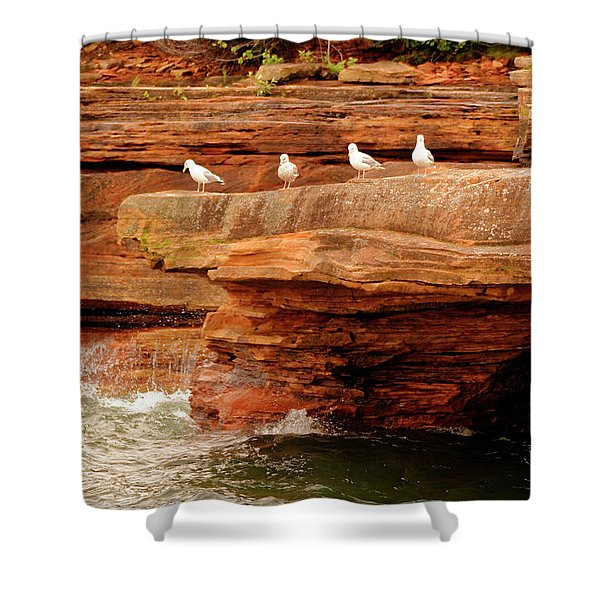 Gulls On Outcropping Shower Curtain