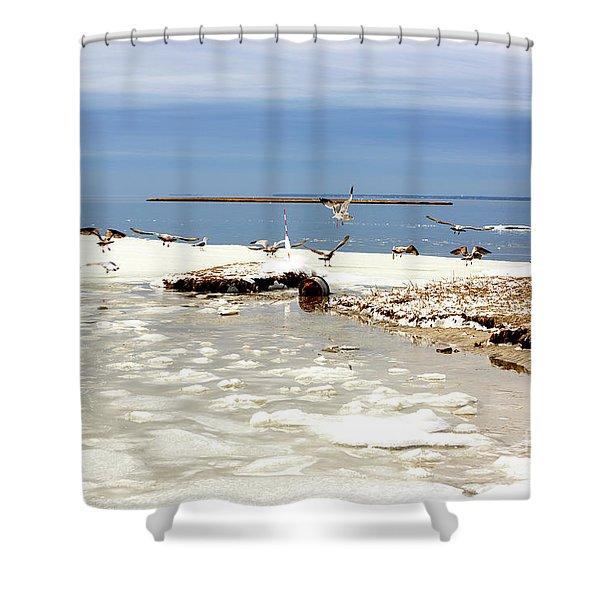 Gulls Skating At Long Beach Island Shower Curtain
