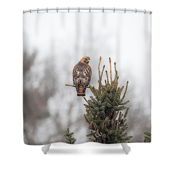 Hal Hanging Out 2 Shower Curtain