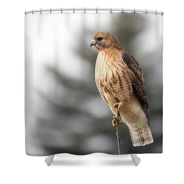 Hal The Hybrid Portrait 1 Shower Curtain