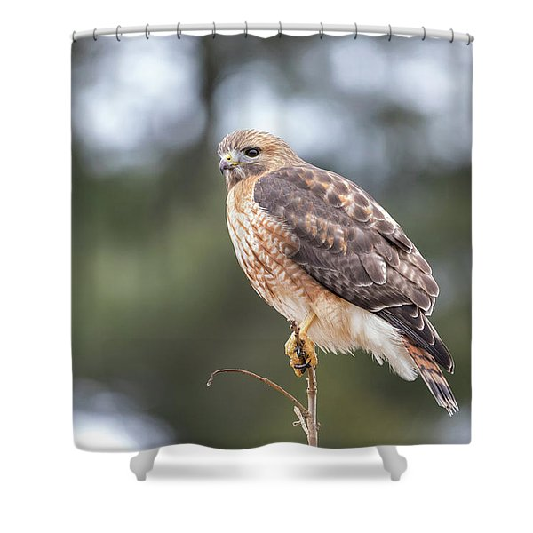 Hal The Hybrid Portrait 3 Shower Curtain