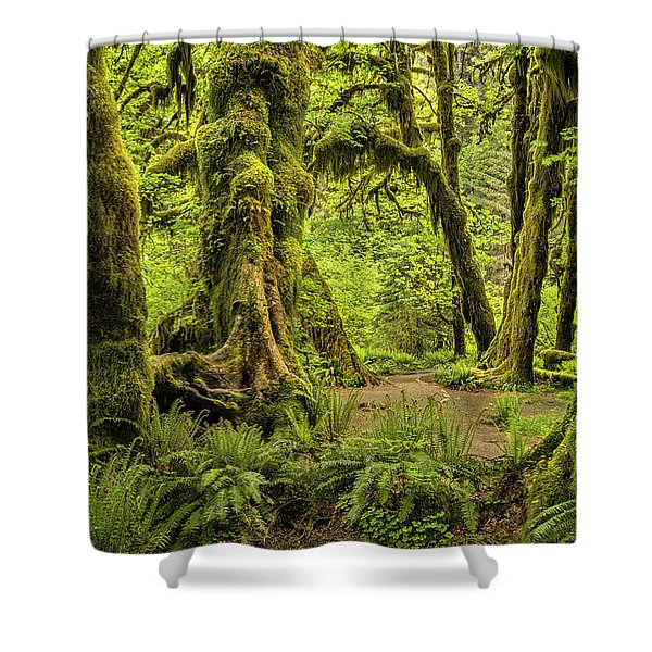 Hall Of Mosses - Olympic National Park Shower Curtain
