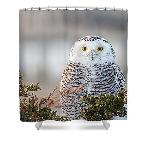 Hampton Beach Nh Snowy Owl Shower Curtain