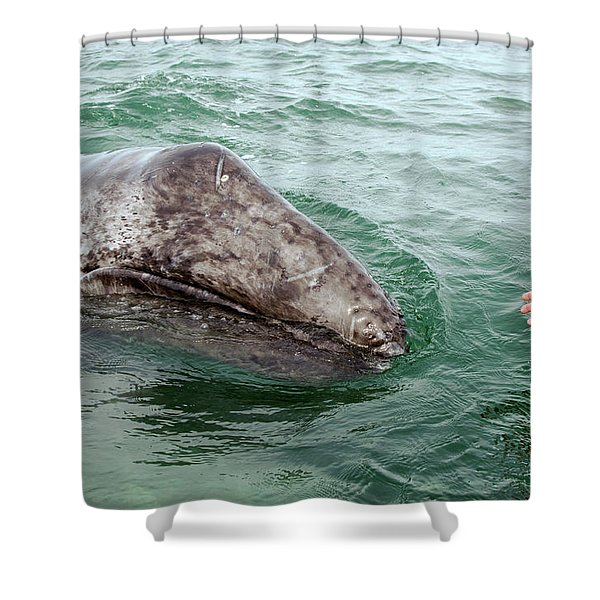 Hand Across The Waters Shower Curtain