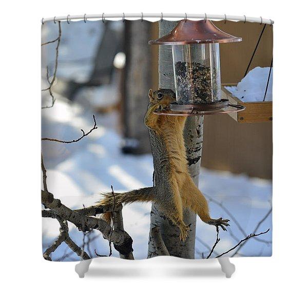 Hanging Squirrel Shower Curtain