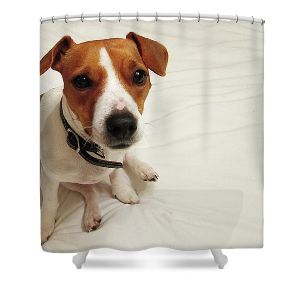 Happiness Is A Cute Puppy Shower Curtain