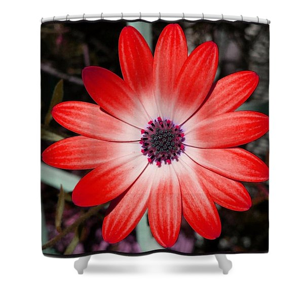 Shower Curtain featuring the photograph Happy Birthday Carl by Mr Photojimsf