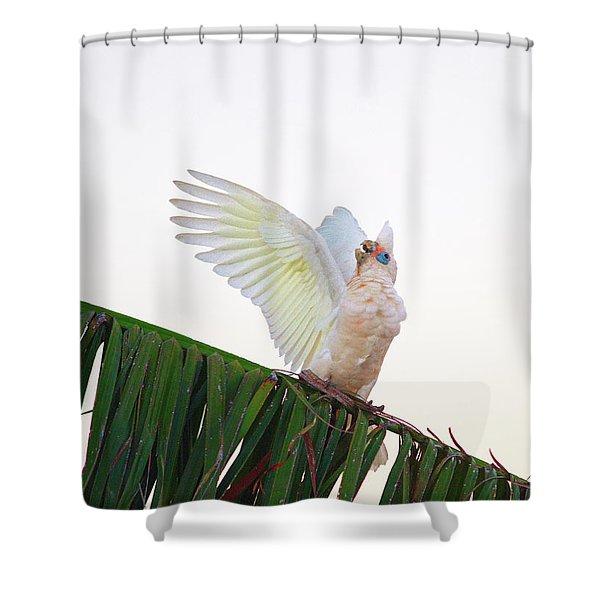 Happy Corella 2 Shower Curtain