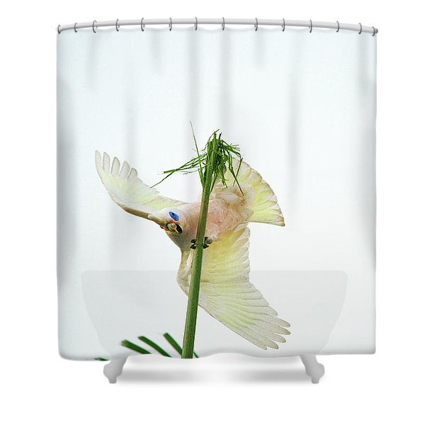 Happy Corella 3 Shower Curtain