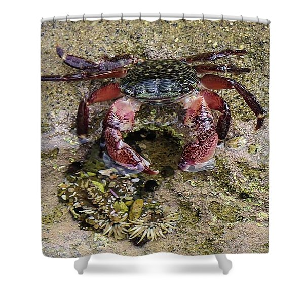 Happy Little Crab Shower Curtain