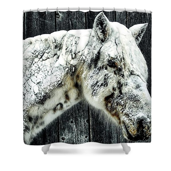 Hard Winter Shower Curtain