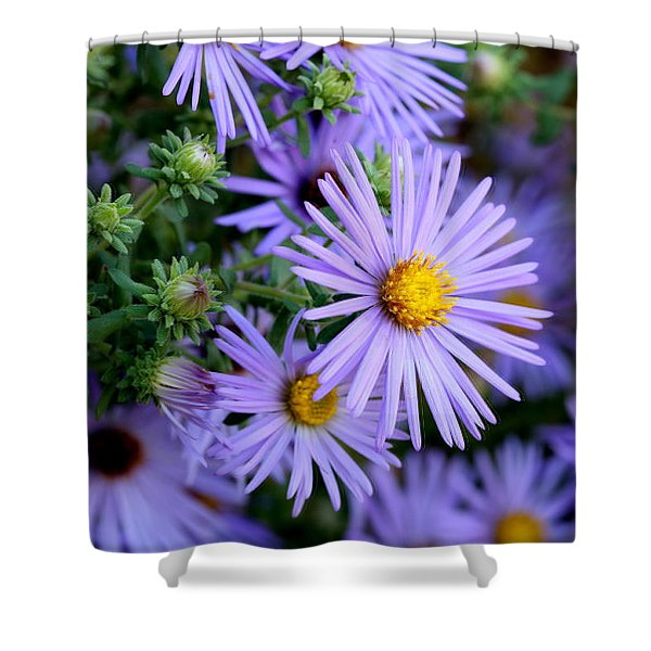 Hardy Blue Aster Flowers Shower Curtain