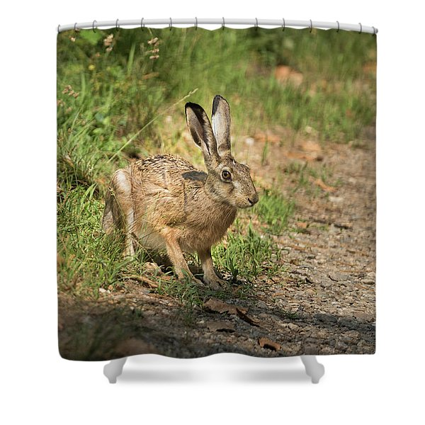 Hare In The Woods Shower Curtain