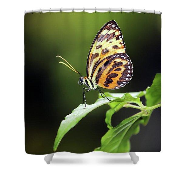Harmonia Tiger Wing Shower Curtain