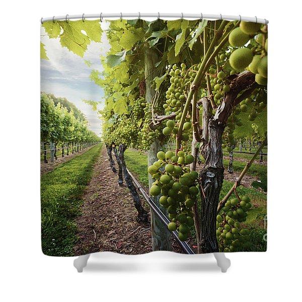 Harmony Vineyard Stony Brook New York Shower Curtain