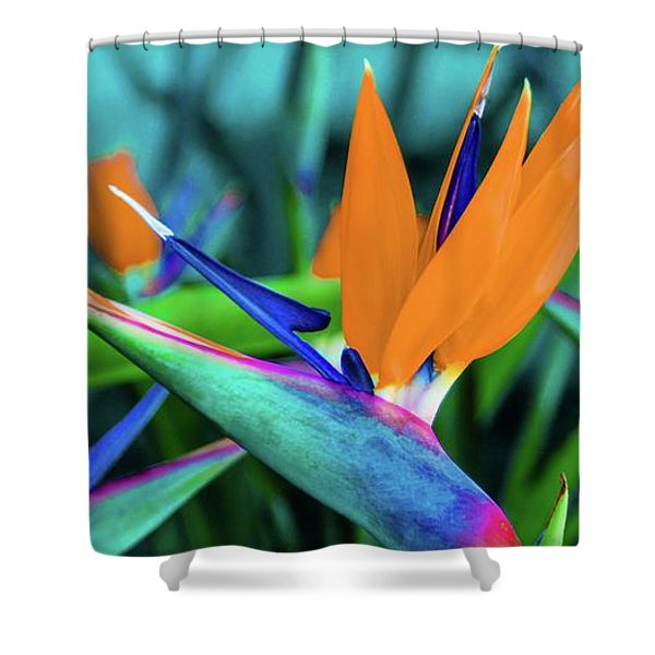 Hawaii Bird Of Paradise Flowers Shower Curtain