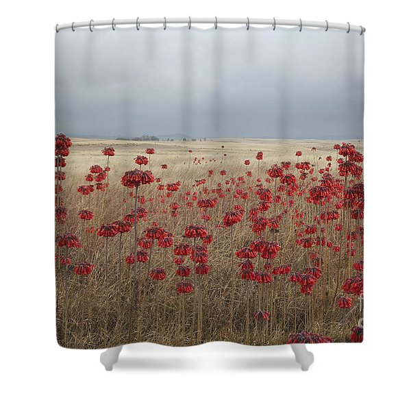 Hawaii Landscape With Red Flowers Shower Curtain
