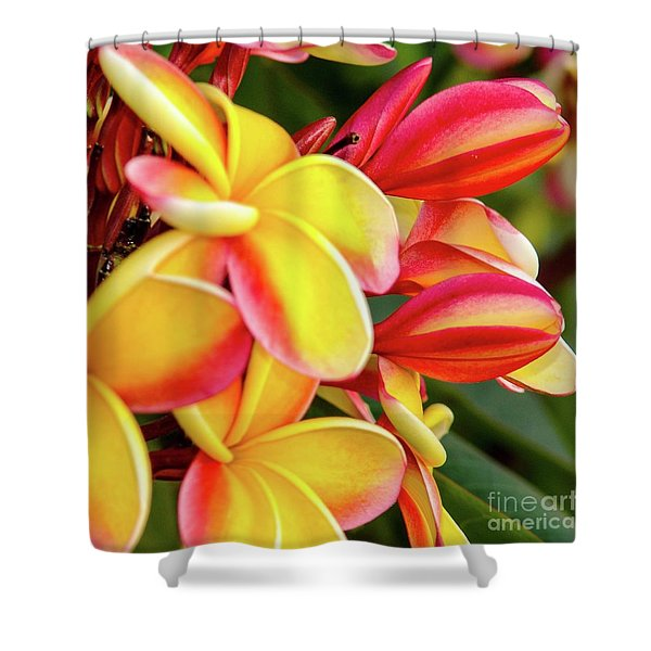 Hawaii Plumeria Flowers In Bloom Shower Curtain