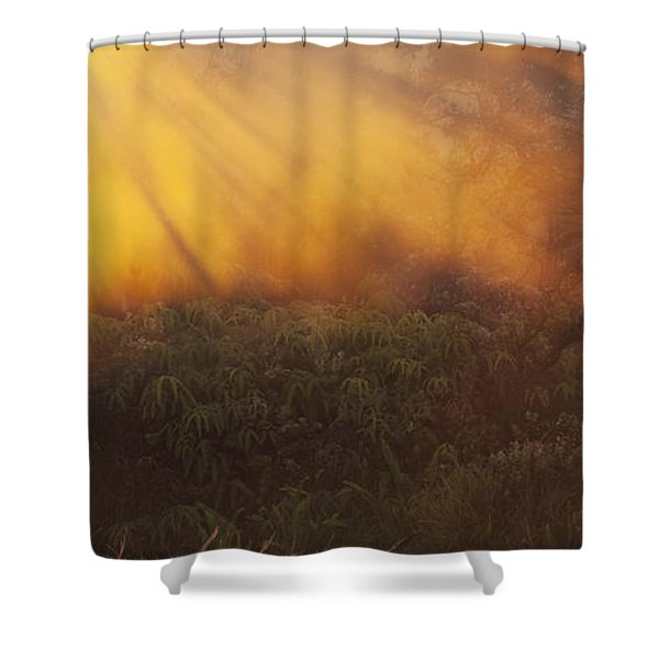 Hawaii Steam Vents And Foliage Shower Curtain