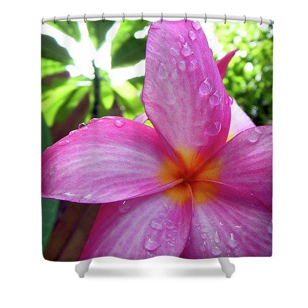 Hawaiian Plumeria Shower Curtain