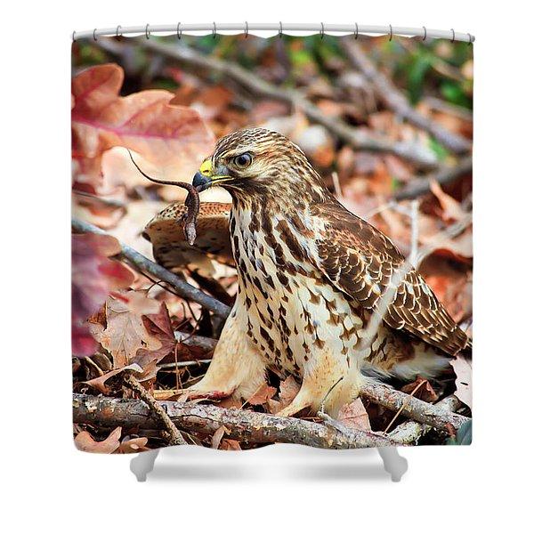 Hawk Catches Prey Shower Curtain