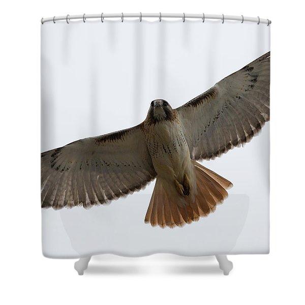 Hawk Overhead Shower Curtain