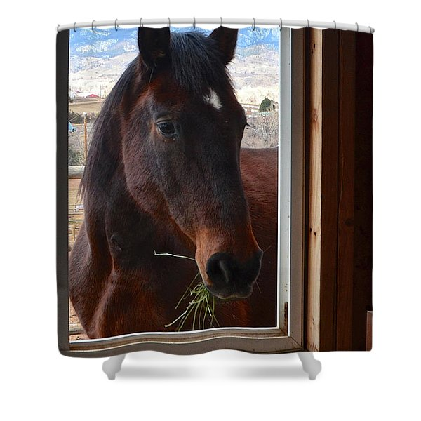 Hay There Shower Curtain