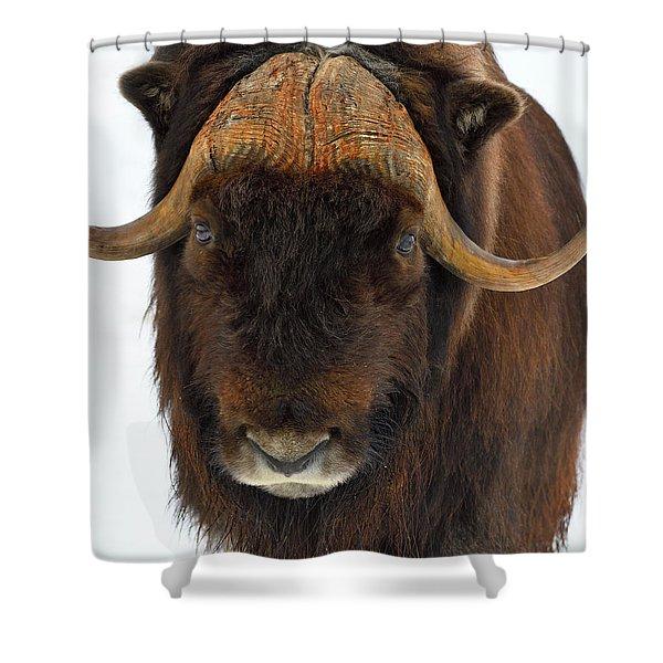 Head Butt Shower Curtain
