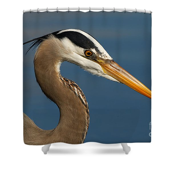 Head Of A Great Blue Heron Shower Curtain