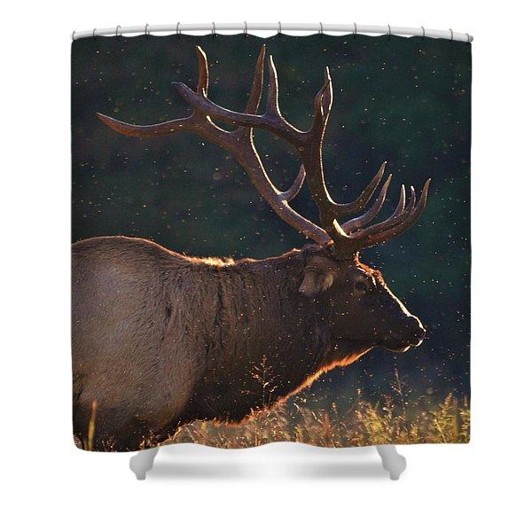 Head Of The Herd Shower Curtain