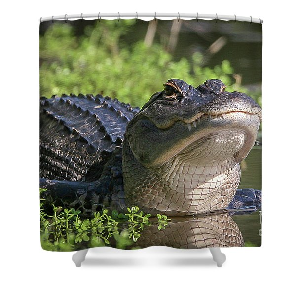 Shower Curtain featuring the photograph Heads-up Gator by Tom Claud