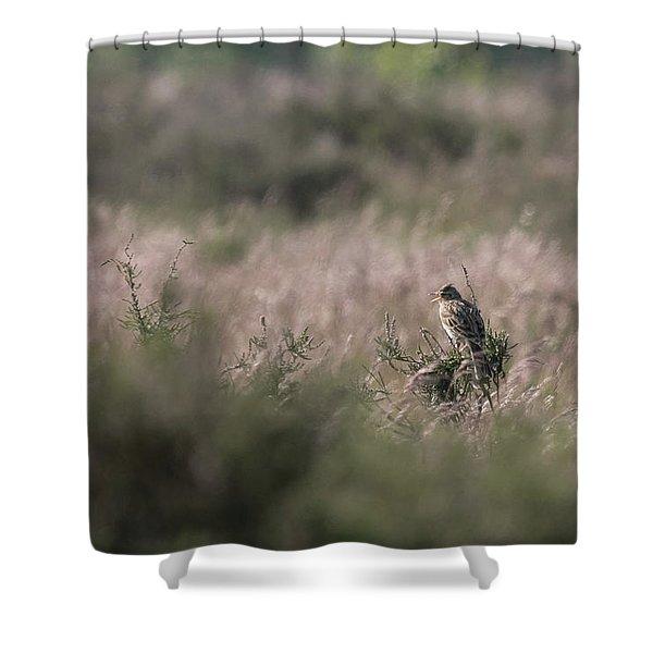 Heath Song  Skylark Shower Curtain