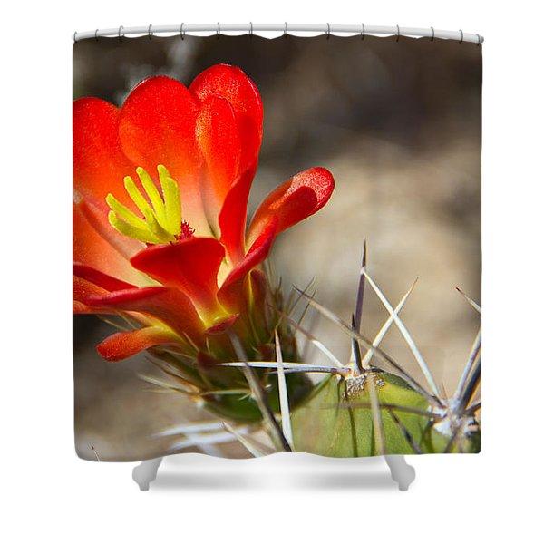 Hedgehog Cactus Flower Shower Curtain