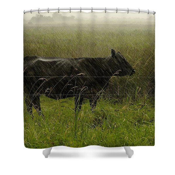 Heifer In The Rain Shower Curtain