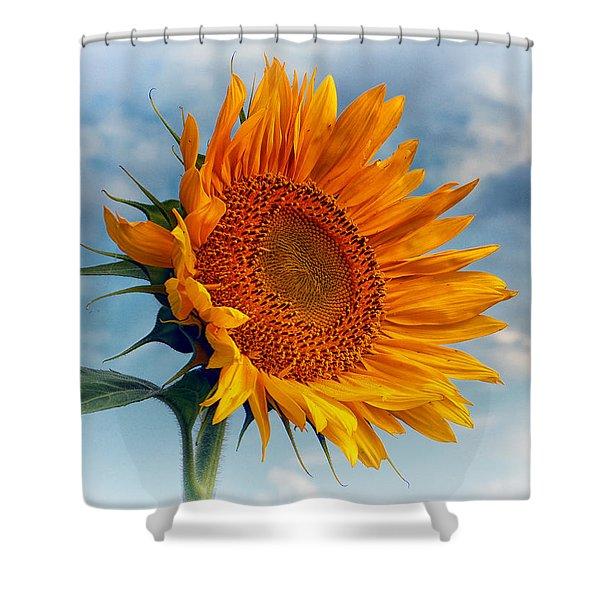 Helianthus Annuus Greeting The Sun Shower Curtain