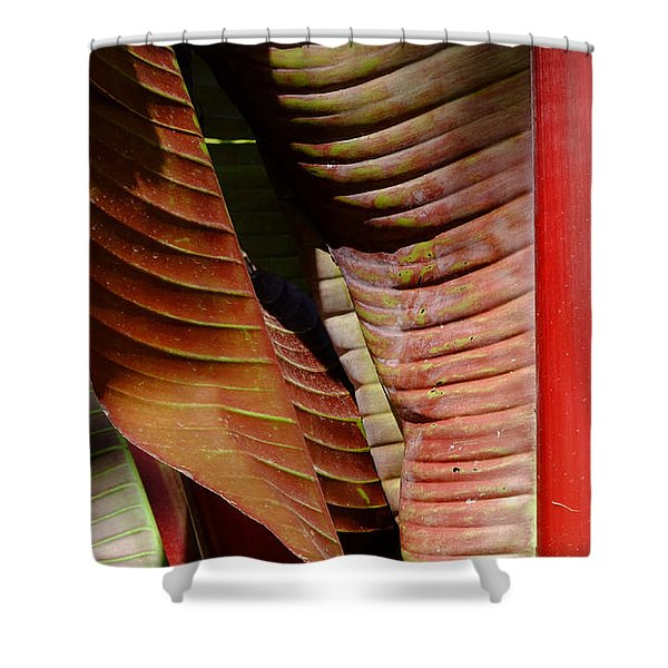 Heliconia Lines Shower Curtain