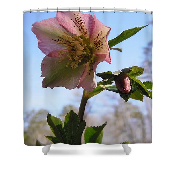 Hellebore Morning Shower Curtain