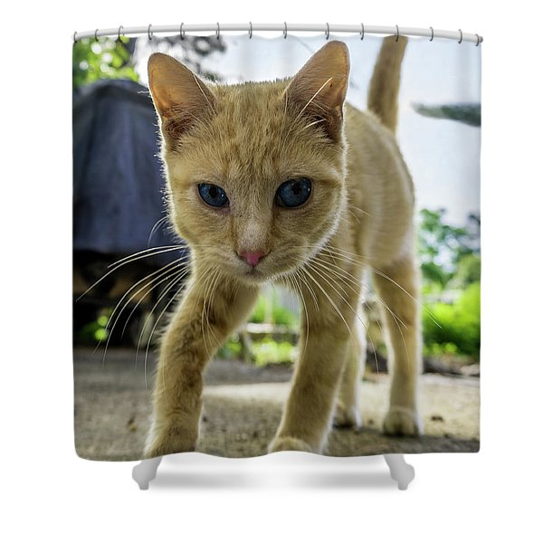 Hello Beautiful 136b Shower Curtain