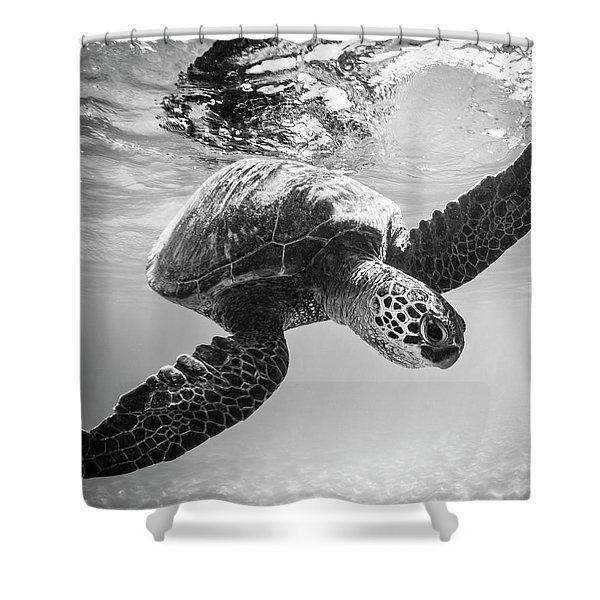 Hello Sea Turtle Shower Curtain