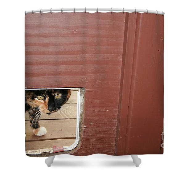 Shower Curtain featuring the photograph Curly Peeking by Cynthia Marcopulos