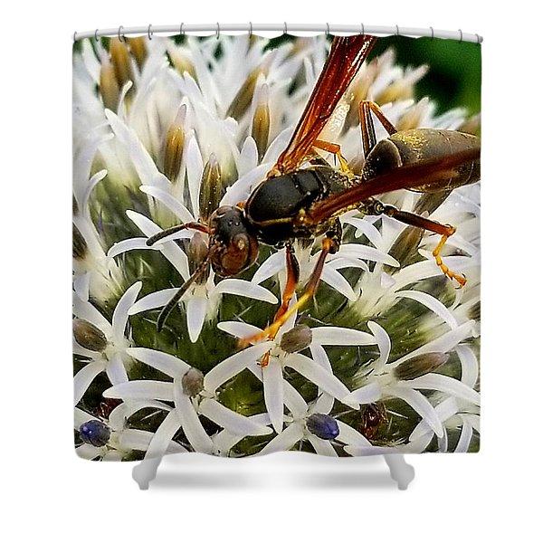 Hello, Wasp Shower Curtain
