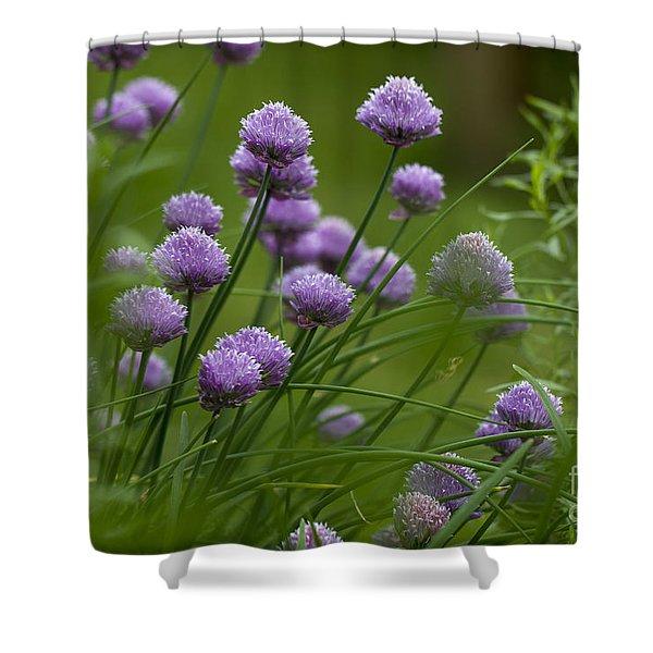 Herb Garden. Shower Curtain