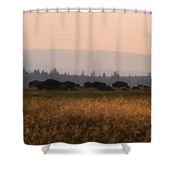 Herd Of Bison Grazing Panorama Shower Curtain