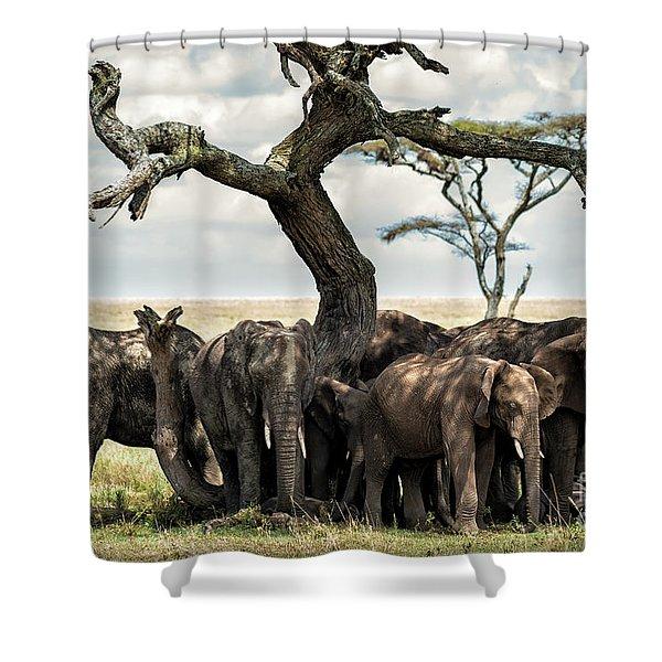 Herd Of Elephants Under A Tree In Serengeti Shower Curtain
