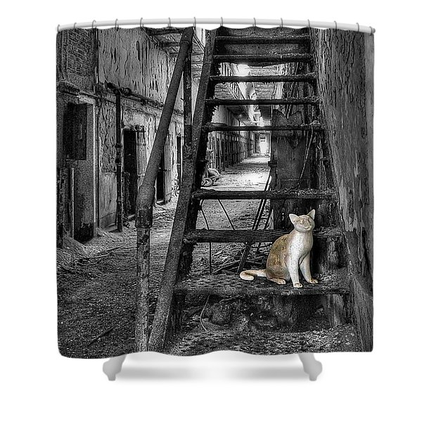 Here Kitty Kitty Kitty... Shower Curtain