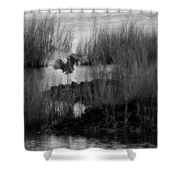 Shower Curtain featuring the photograph Heron And Grass In B/w by William Selander
