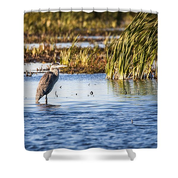 Heron - Horicon Marsh - Wisconsin Shower Curtain