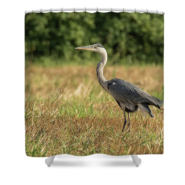 Heron In The Field Shower Curtain