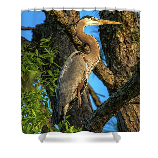 Heron In The Pine Tree Shower Curtain